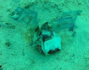 Plastic Sea Urchin